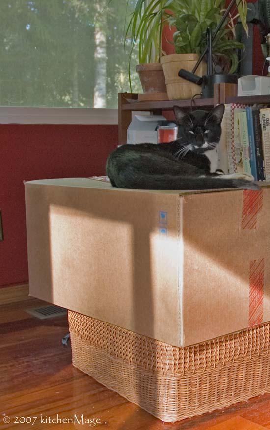the bowtie throne