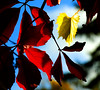 Autumn! (courriel_vert) Tags: autumn color fall leaves leaf gtaggroup