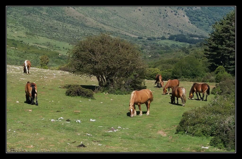 Pastando en los rasos de Andía