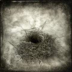 (gary/geboy) Tags: process naturalworld birdnest alternative contactprint platinumpalladium