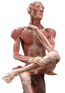 human muscle without skin pictures to pin on pinterest - pinsdaddy, Muscles