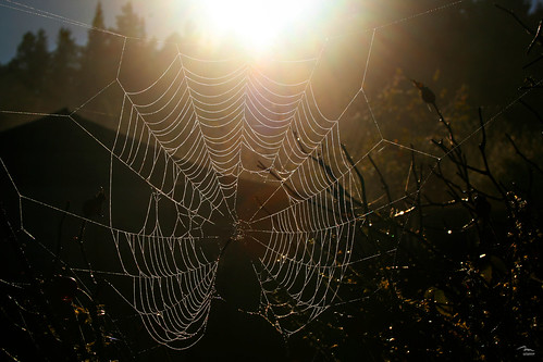 Web in morning sun