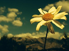 Just a Perfect Day (marbil) Tags: sky cloud sun sunlight plant flower colour macro closeup photoshop ilovenature interestingness spring europe day air magic croatia atmosphere fujif10 daisy flowerpower margherita 2007 hrvatska flowerpix dalmatia makarska naturepix interestingness7 magicofnature