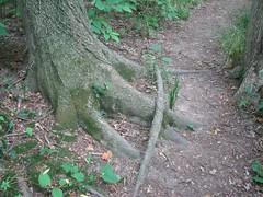 Demure tree
