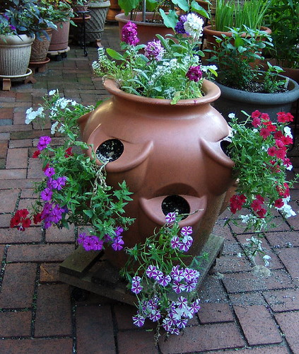 Big Pot-Stocks & Phlox 2-060607