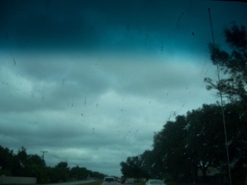 Love bugs on the windshield