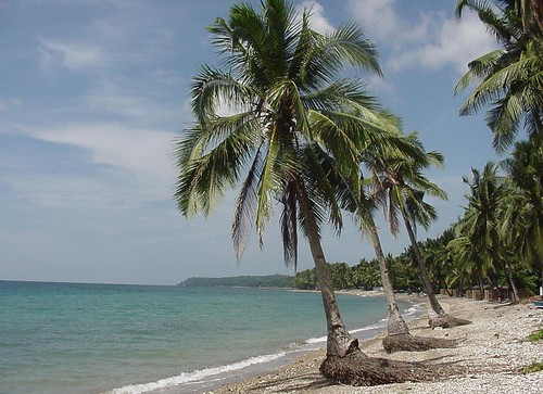 927438551_9be53b9dcb - Coconut by the sea - Duero, Bohol - Duero - Bohol