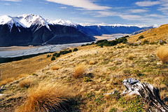 Above the Waimakariri (Daniel Murray (southnz)) Tags: newzealand mountain snow forest trekking river landscape scenery hiking alpine nz southisland tussock tramping beech braid braided craigieburn waimakariri conservationpark subalpine southnz casslagoon eos50escanfromprint