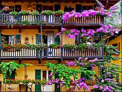 flowery balconies (heavenuphere) Tags: flowers summer italy topf25 topf50 topf75 italia balcony limone gi lakegarda lagodigarda limonesulgarda
