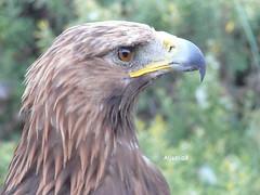 (Aljazi.q8) Tags: art photo kuwait artphoto aljazi  kuwaitphoto kuwaitartphoto kuwaitart  thewonderfulworldofbirds