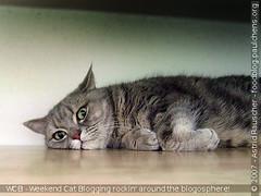 [Weekend Cat Blogging] - #116 Just chillin'