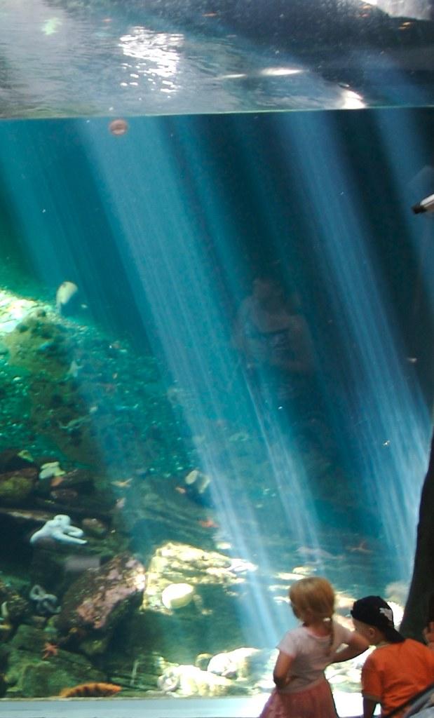 Aquarium Watching