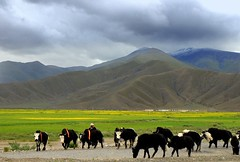Pastoral (Luo Shaoyang) Tags: china wallpaper nature landscape nikon scenery quality tibet microsoft  pastoral      luo    nikond200   supershot      platinumphoto aplusphoto luoshaoyang colourartaward excapture diamondexcapture chinageography