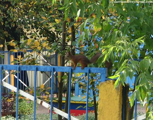 minsk_squirrel