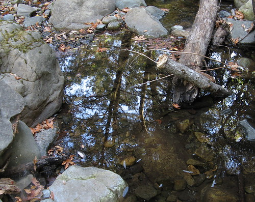 Trees reflected in the creek