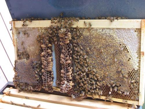 Beekeeping 2465
