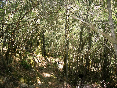 Le sentier de chasseurs de la montée du ravin de Tigliu: partie facile