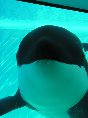 Loro Parque Whale