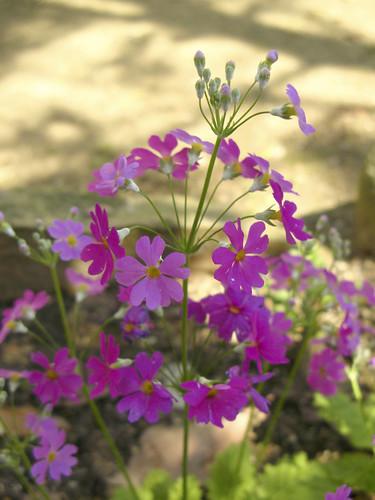 flowers 3_19_10