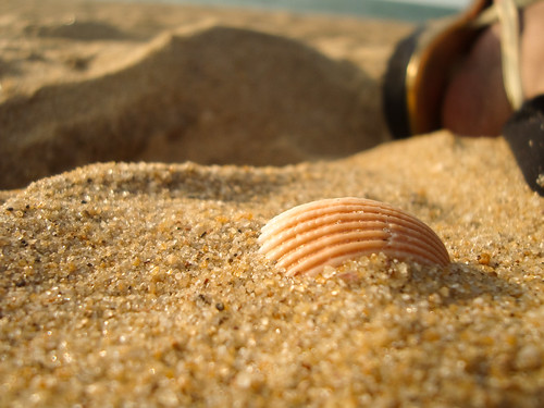 she sells sea shells on the sea shore...