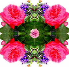 Mandala floral como relajacin. (Arice39) Tags: floral colors self circle relax nikon flickr village photos indian pueblo buddhism mandala colores fotos meditation indios relaxation hinduism labyrinth colectivo collective diagrams yantra unconscious archetype budismo laberinto analyticalpsychology arquetipo inconsciente meditacin diagramas hinduismo yantramandala cintamani arice39 smismo  psicologaanaltica crculomandala