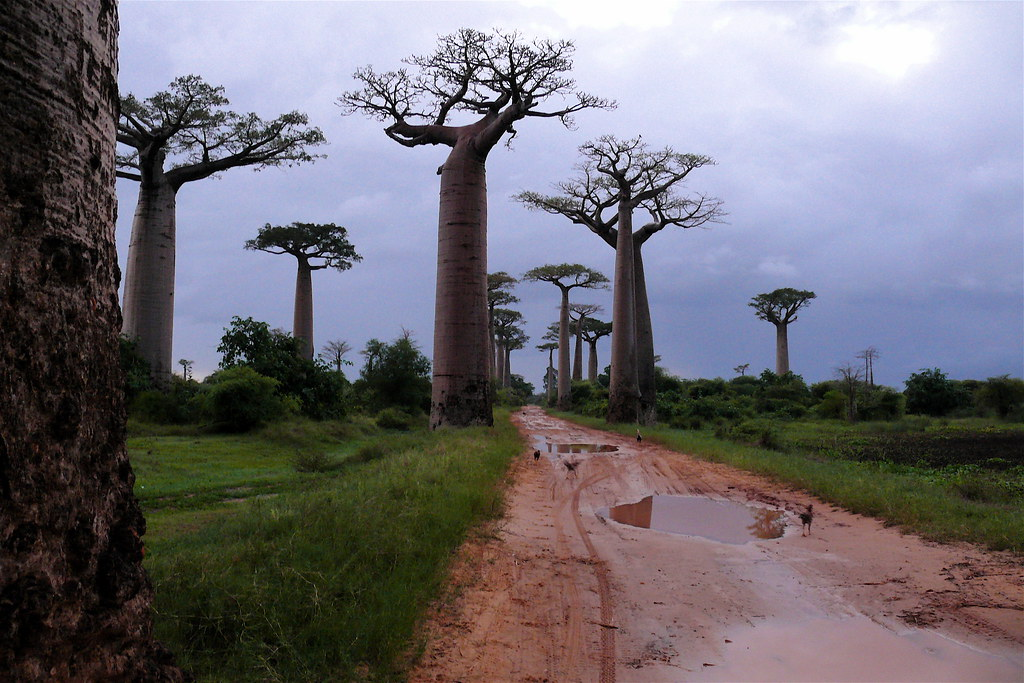 Morondava, Avenue of the Baobabs