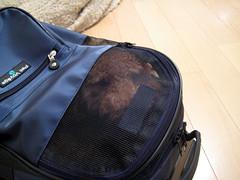 りんちゃん in Bag
