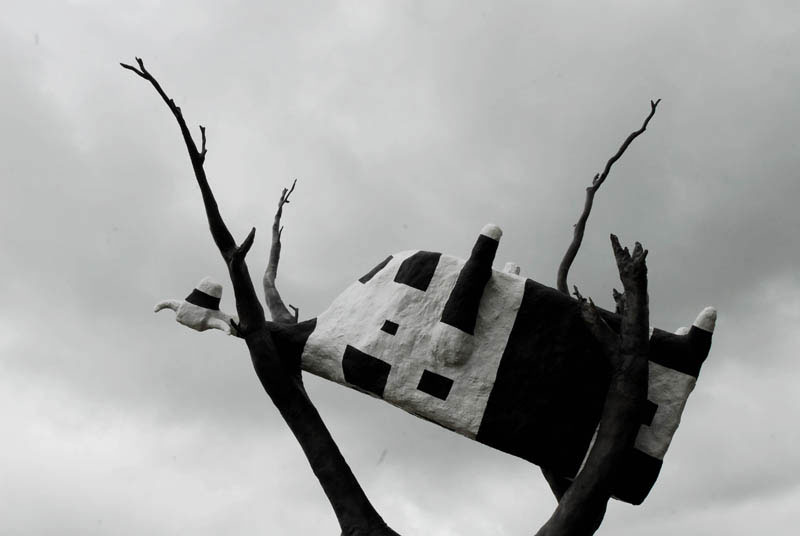A square cow in a tree