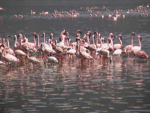 LB Flamingos Closer and Better