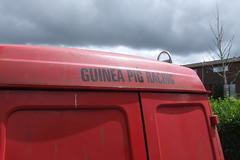 Guinea Pig Racing #12