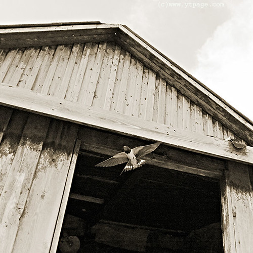 Off the barn (Masterpiece)