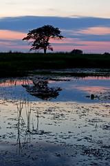 (baldwinm16) Tags: sunset nature illinois forrest prairie preserve springbrook springbrookprairie crookedslough