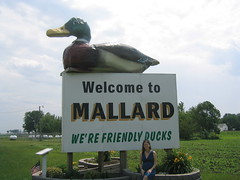World's Largest Mallard Duck