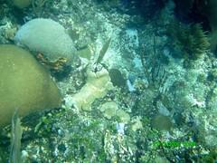Roatan Dive -47