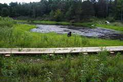 Boardwalk at the Beaver Pond