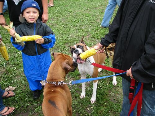 Dogs Need Korn Too