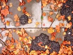 0542 - mon10sept07 (a.pic.a.day) Tags: trees ny newyork fall rain brooklyn leaf pavement x 365 asphalt leafs onepictureaday project365 bkln 365days apicaday onephotoperday 365project httpapicadayblogwordpresscom
