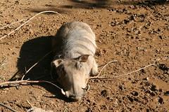 IMG_5855 (DigDoug) Tags: zoo louisvillezoo 09292007
