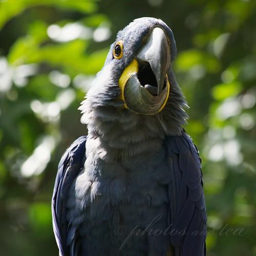 Macaw #1