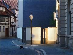 Quedlinburg Cat (/Reality Scanner/) Tags: travel pen cat germany deutschland photography emotion live atmosphere olympus reality instant environment katze lantern feeling documentation laterne harz reise ep2 umwelt quedlinburg dokumentation sachsenanhalt exddr realitt