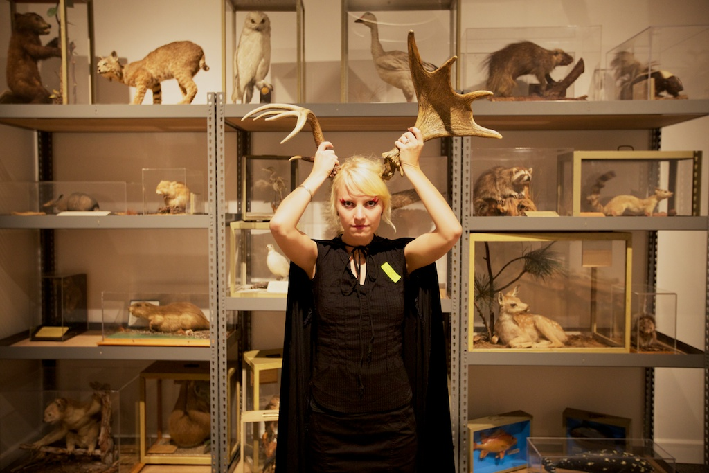 horns and taxidermy