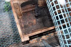 Revevalper i ekstremt skittent bur