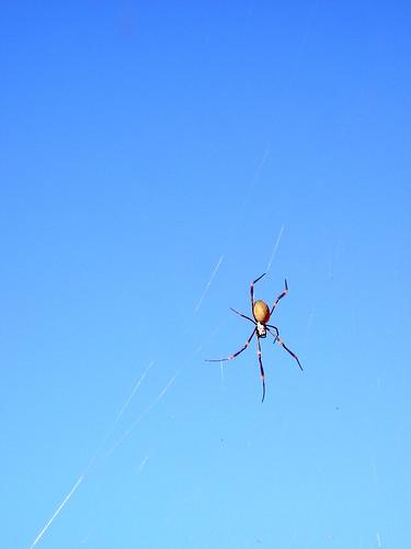 Spider Web_04