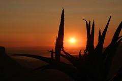 Sunrise over the Umgeni Valley Two (Morcom Family) Tags: wild sunrise southafrica mark zebra rsa kwazulunatal kzn morcom umgenivalley aloa