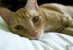 Squeegee's Loving Look Portrait (Chris C. Crowley) Tags: cats pets animals coolest squeegee petportraits views100 kissablekat kittycrownofgreatness