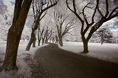 We don't know where we've been (IrenaS) Tags: trees bravo path branches infrared oneyear colorinfrared anawesomeshot
