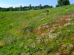 dscf8085.jpg (Mr. Pi) Tags: plants netherlands dike koudenhoek