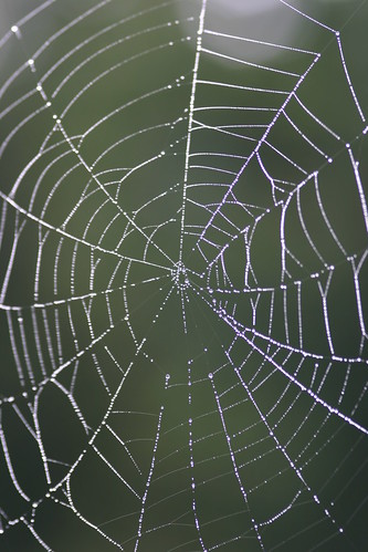 Spiderweb Soaked in the Early Morning Dew