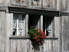 a flower window (steffi's) Tags: windows window schweiz switzerland suisse ar fenster finestra oldhouse svizzera geranium fenêtre pelargonium holzfassade apenzell trogen kantonappenzellausserrhoden