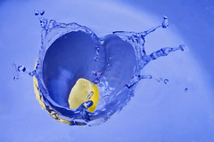 is in the water (AHMED...) Tags: blue pakistan stilllife color water colors fruit drops lemon bubbles slice pakistani splash ahmed sind catchy sindh highspeed muhammad stopaction blueribbonwinner supershot mehrabpur abigfave anawesomeshot superbmasterpiece superhearts theperfectphotographer bestofblue